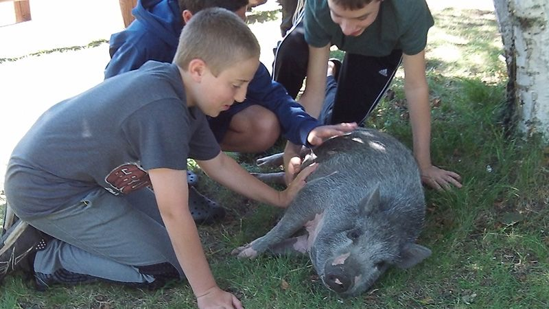 Summer Camp kids with pig